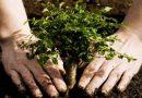 Avanza en Songo – La Maya el programa de reforestación.