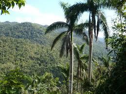 En Songo – La Maya los bosques por buen camino
