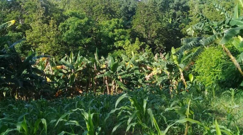 Una mirada a la producción de alimentos desde Songo – La Maya